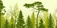 В Томске ускоряют рост сосен в 10 раз